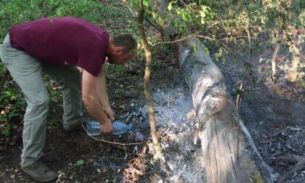 FOTO: Foc pus intenționat în a doua zi de Paște?! Pădurea Verde la un pas de incendiu