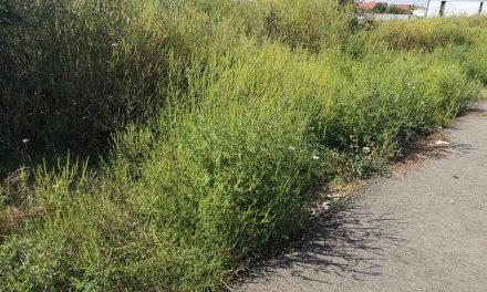 VIDEO: Încep amenzile pentru terenurile neîngrijite – Ce spune Poliția Locală Dumbrăvița