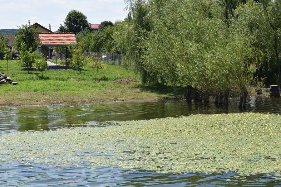 Între nuferi, păsări și pești, în Rezervația Naturală Lacul Surduc