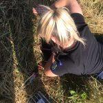 FOTO: Poliția Locală Dumbrăvița a fost solicitată să salveze un animal. Vezi cum a decurs intervenția