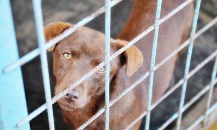 Târg de adopții canine și în acest weekend, la Timișoara